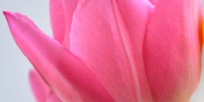 Стоматология Doctor поздравляет всех женщин с праздником весны, очарования, красоты и женственности! Скидка  женщинам весь месяц 25% на профессиональную гигиену полости рта и лечение кариеса. Промокод для активации скидки при записи: ВЕСНА Получить скидку